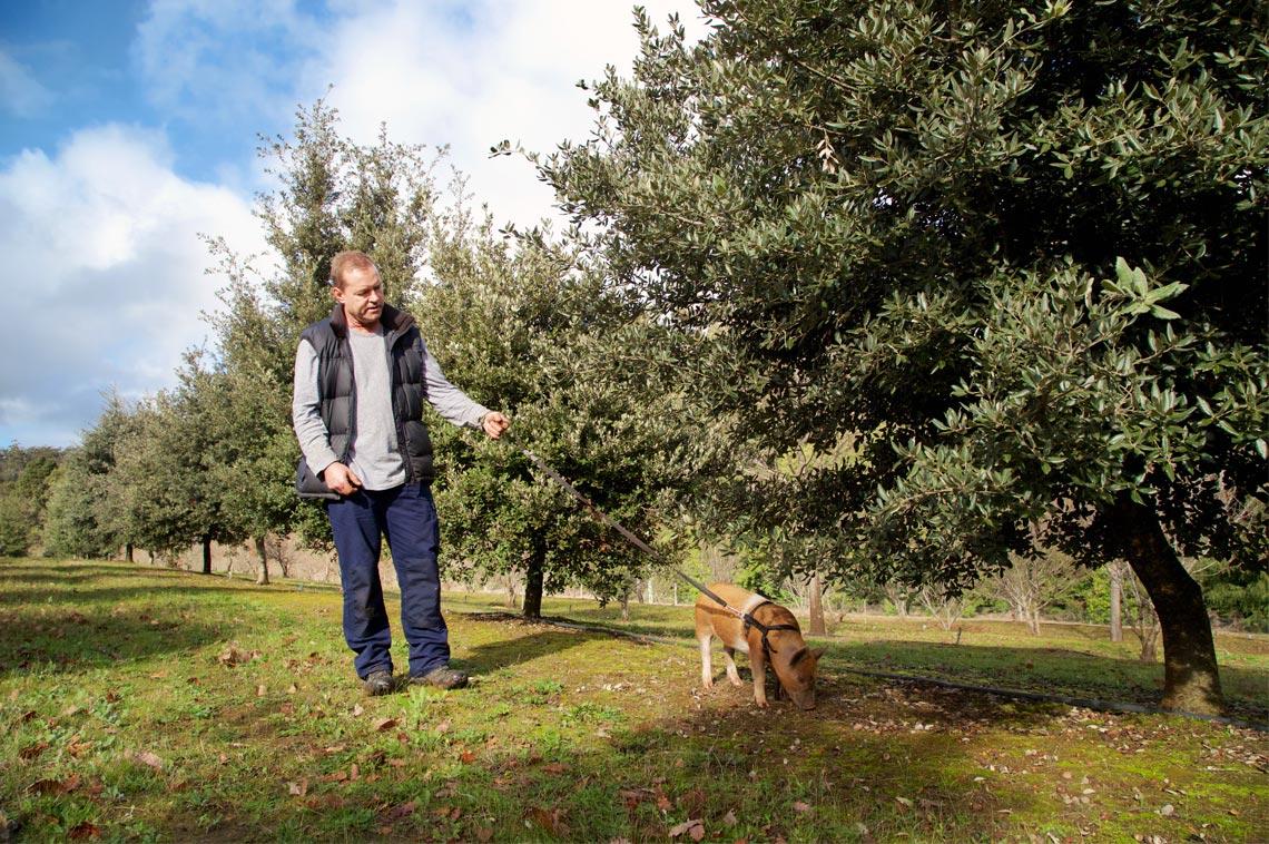 stonebarn truffles dion range